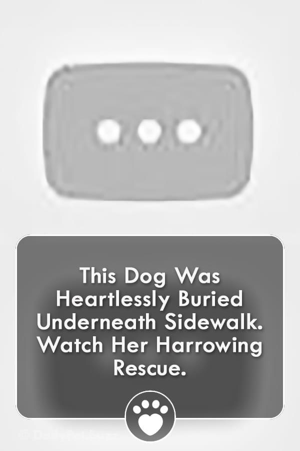 This Dog Was Heartlessly Buried Underneath Sidewalk. Watch Her Harrowing Rescue.
