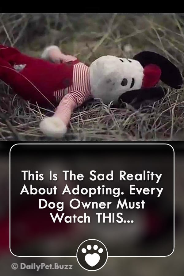This Is The Sad Reality About Adopting. Every Dog Owner Must Watch THIS...