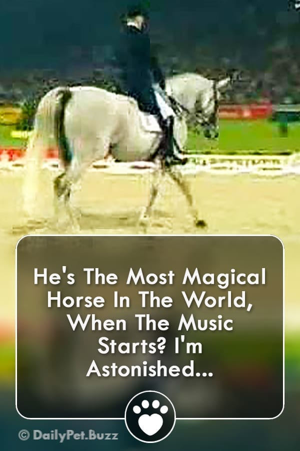 He\'s The Most Magical Horse In The World, When The Music Starts? I\'m Astonished...