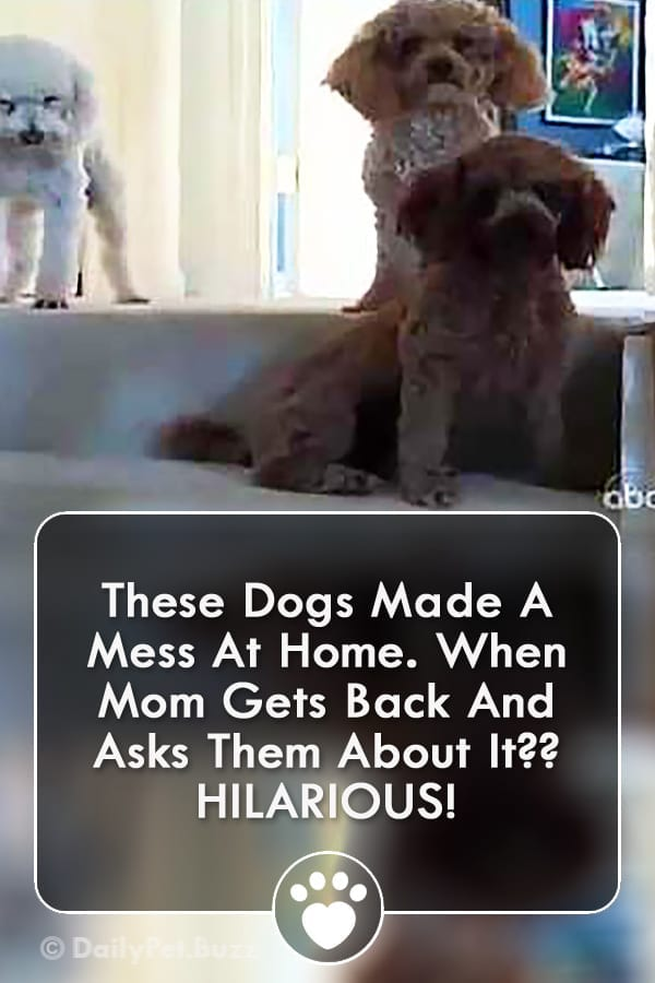 These Dogs Made A Mess At Home. When Mom Gets Back And Asks Them About It?? HILARIOUS!
