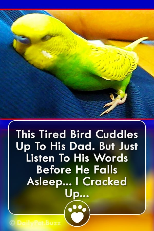 This Tired Bird Cuddles Up To His Dad. But Just Listen To His Words Before He Falls Asleep... I Cracked Up...