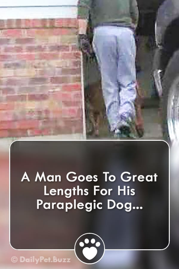 A Man Goes To Great Lengths For His Paraplegic Dog...
