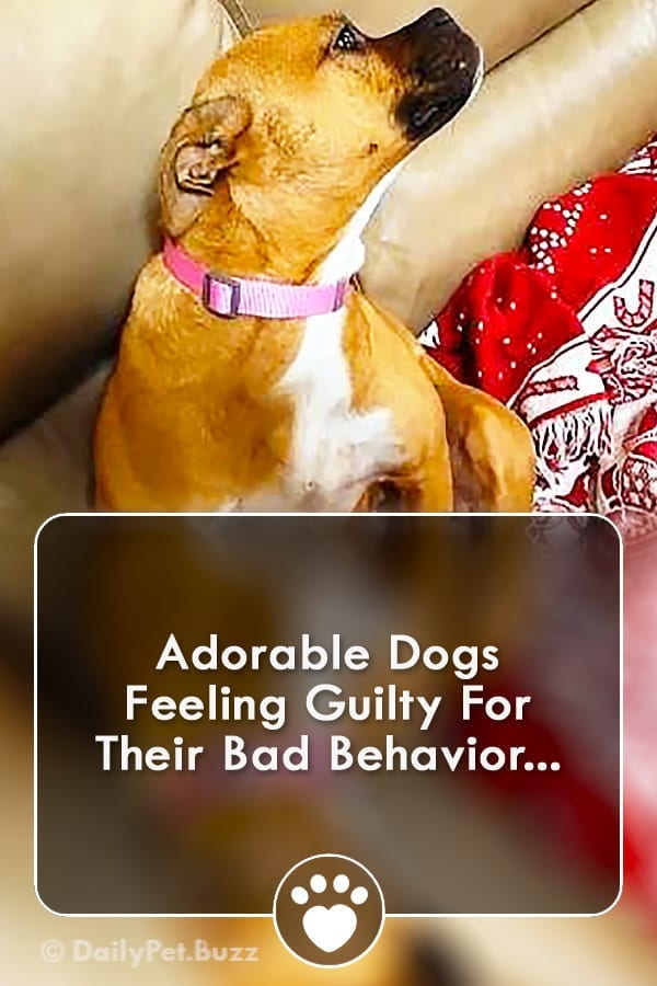 Adorable Dogs Feeling Guilty For Their Bad Behavior...
