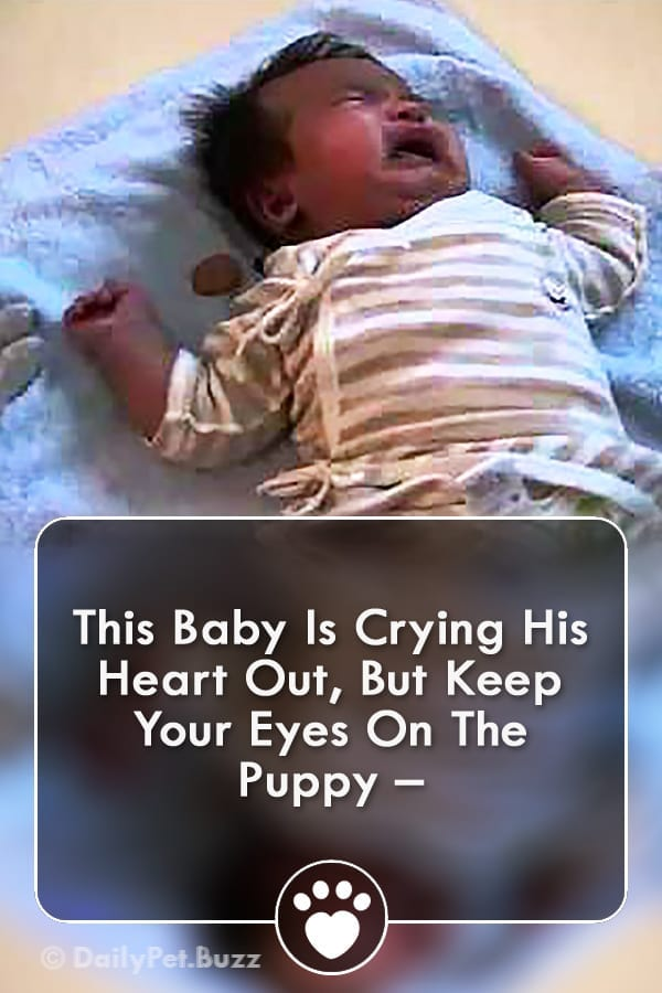 This Baby Is Crying His Heart Out, But Keep Your Eyes On The Puppy –