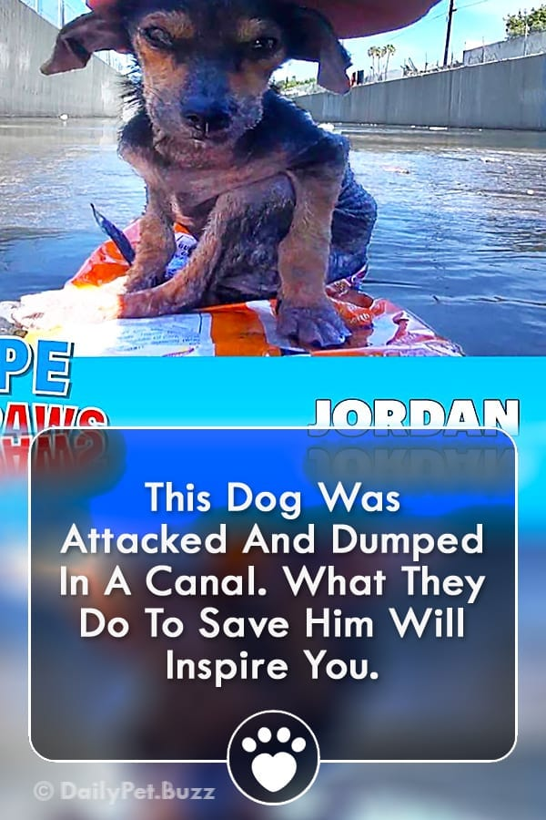 This Dog Was Attacked And Dumped In A Canal. What They Do To Save Him Will Inspire You.