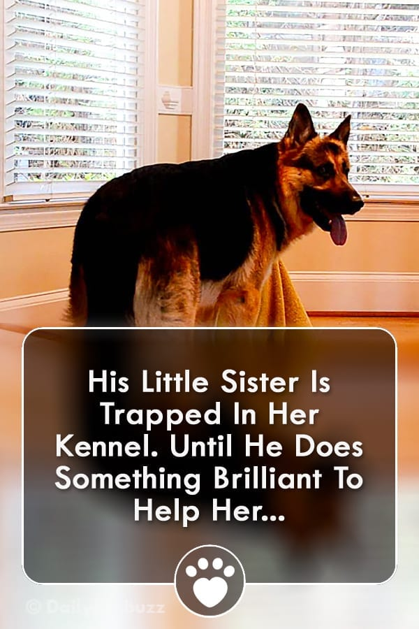 His Little Sister Is Trapped In Her Kennel. Until He Does Something Brilliant To Help Her...