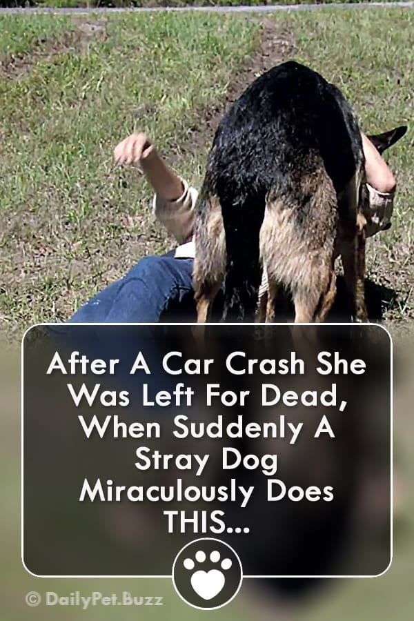 After A Car Crash She Was Left For Dead, When Suddenly A Stray Dog Miraculously Does THIS...