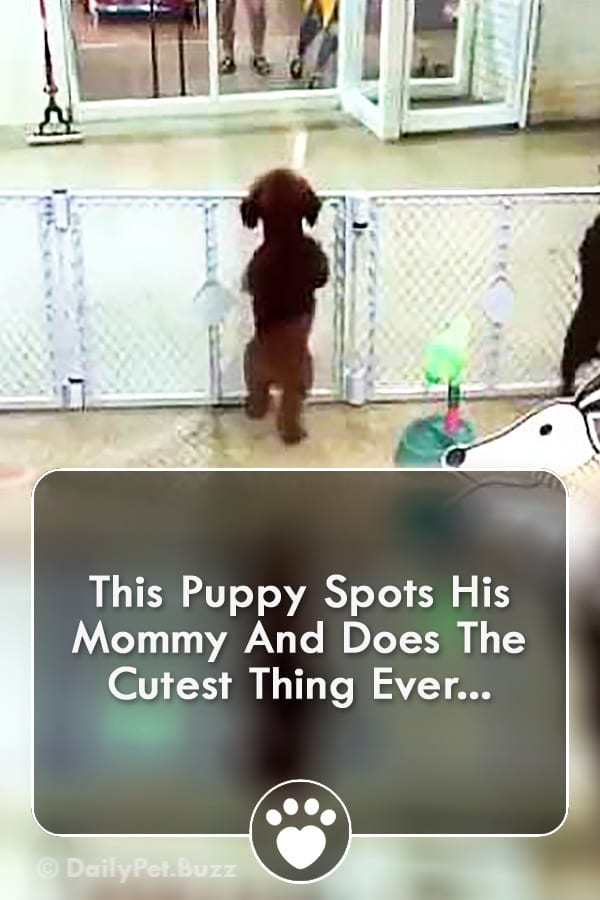This Puppy Spots His Mommy And Does The Cutest Thing Ever...