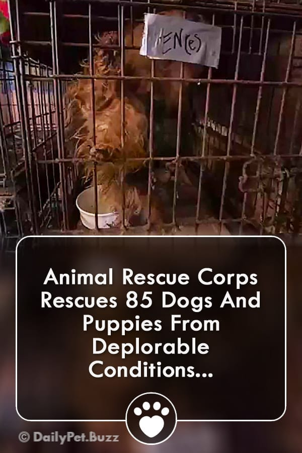 Animal Rescue Corps Rescues 85 Dogs And Puppies From Deplorable Conditions...