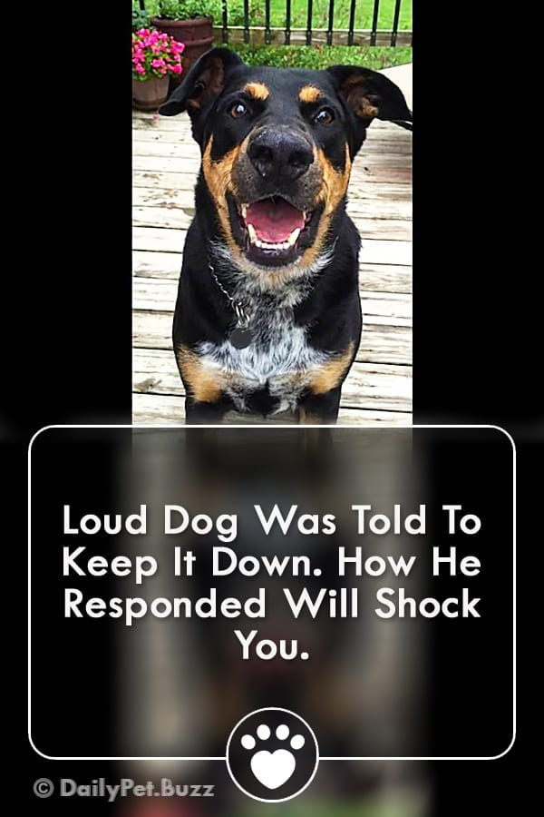 Loud Dog Was Told To Keep It Down. How He Responded Will Shock You.