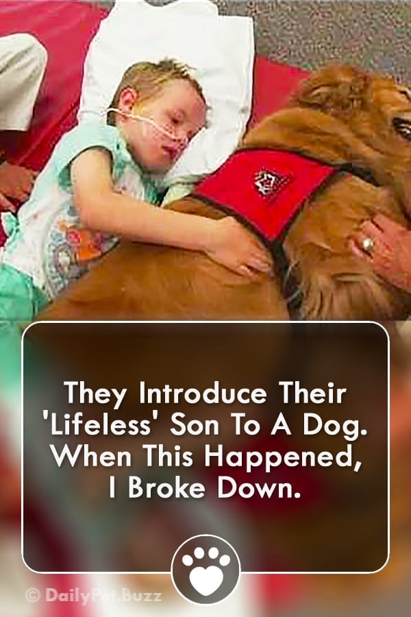 They Introduce Their \'Lifeless\' Son To A Dog. When This Happened, I Broke Down.