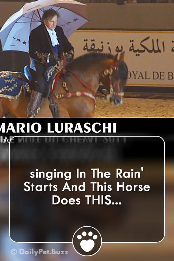 singing In The Rain\' Starts And This Horse Does THIS...
