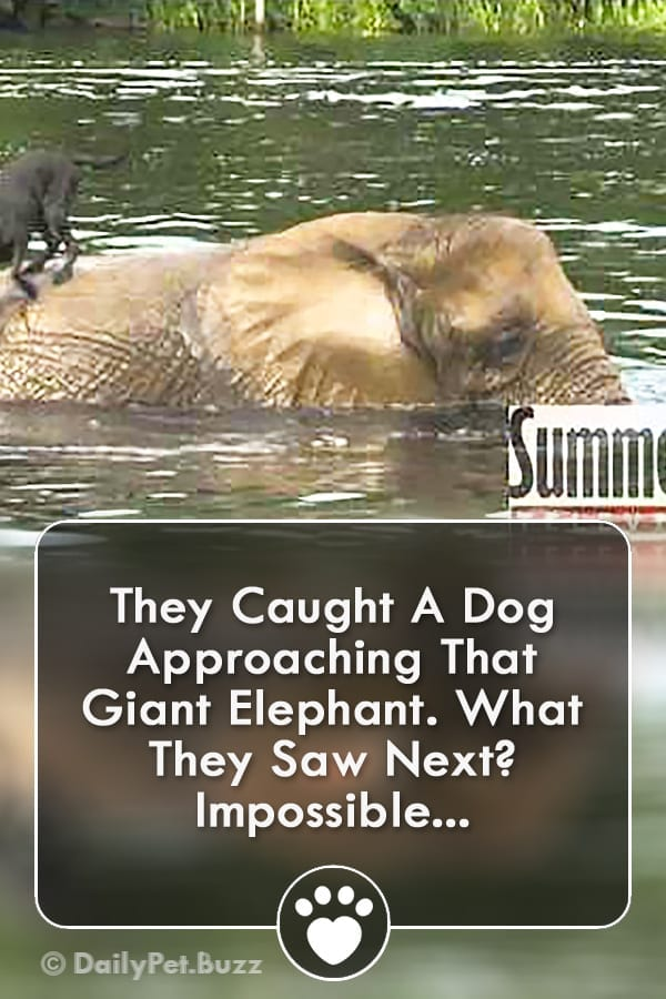 They Caught A Dog Approaching That Giant Elephant. What They Saw Next? Impossible...
