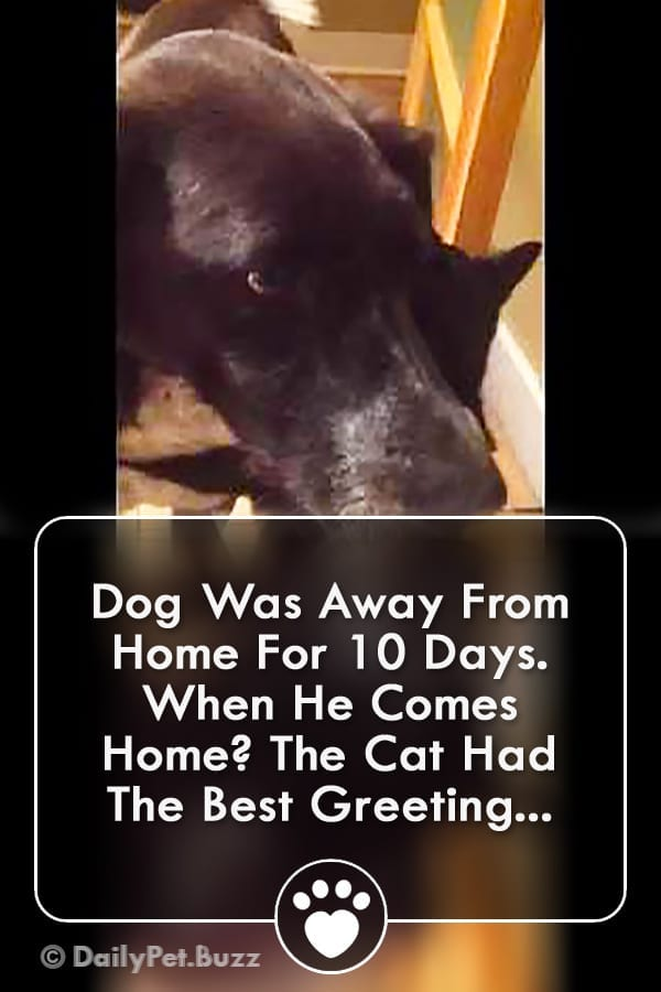 Dog Was Away From Home For 10 Days. When He Comes Home? The Cat Had The Best Greeting...
