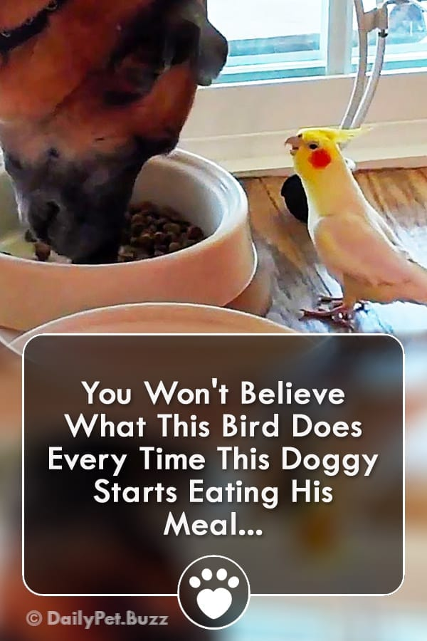 You Won\'t Believe What This Bird Does Every Time This Doggy Starts Eating His Meal...