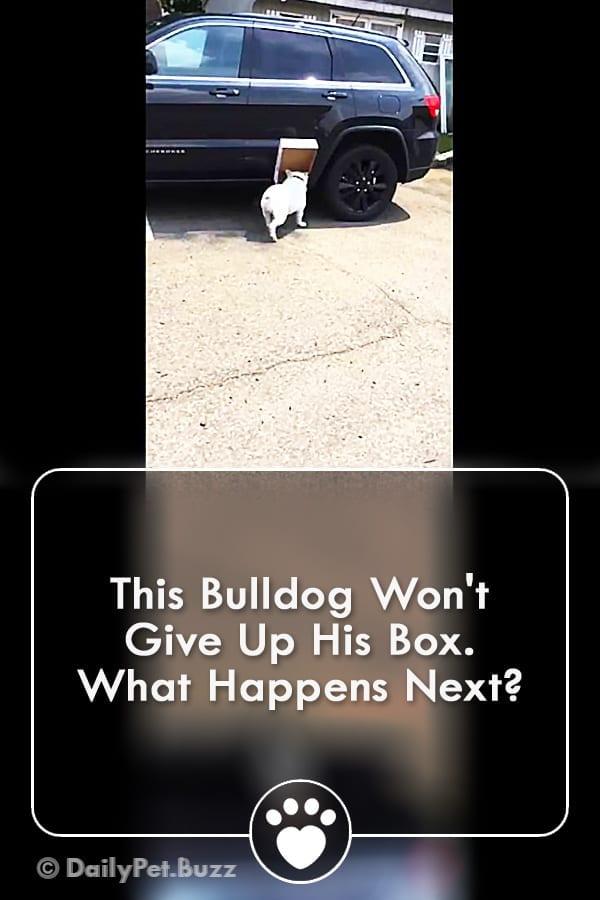 This Bulldog Won\'t Give Up His Box. What Happens Next?