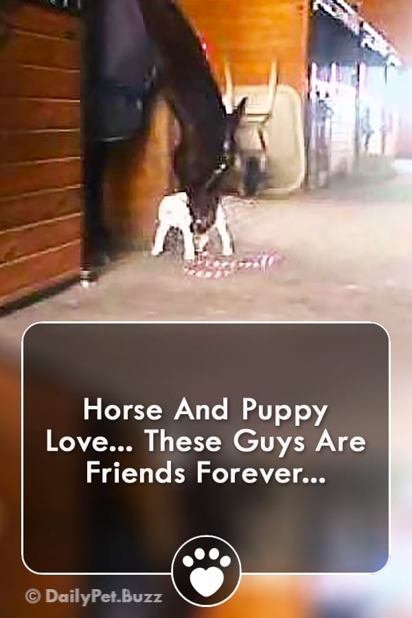 Horse And Puppy Love... These Guys Are Friends Forever...