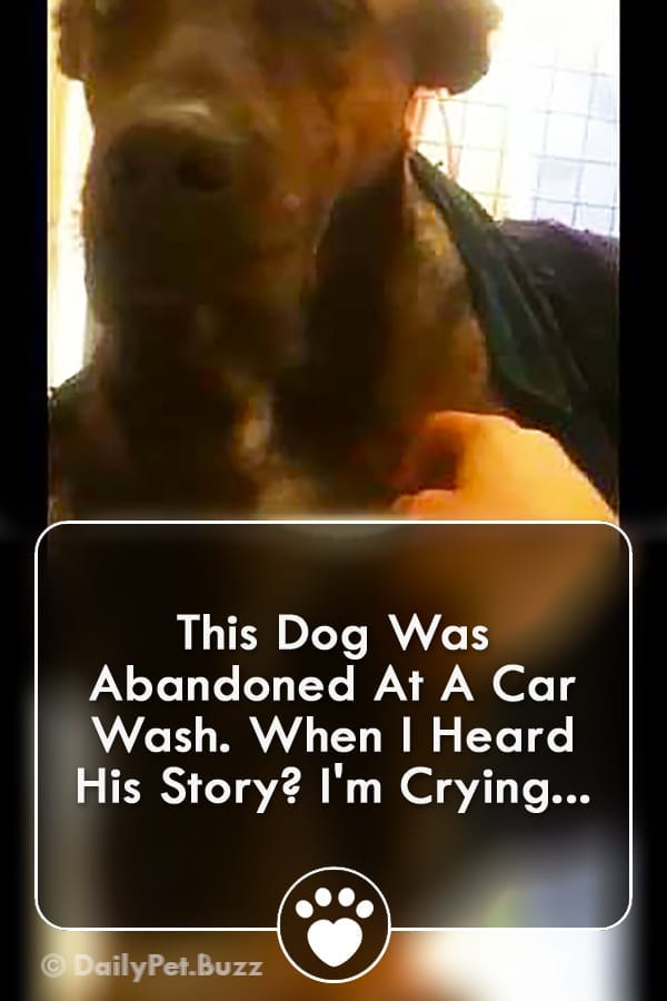 This Dog Was Abandoned At A Car Wash. When I Heard His Story? I\'m Crying...