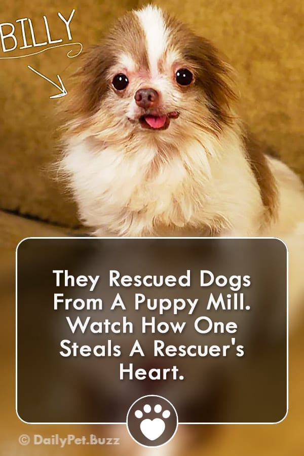 They Rescued Dogs From A Puppy Mill. Watch How One Steals A Rescuer\'s Heart.