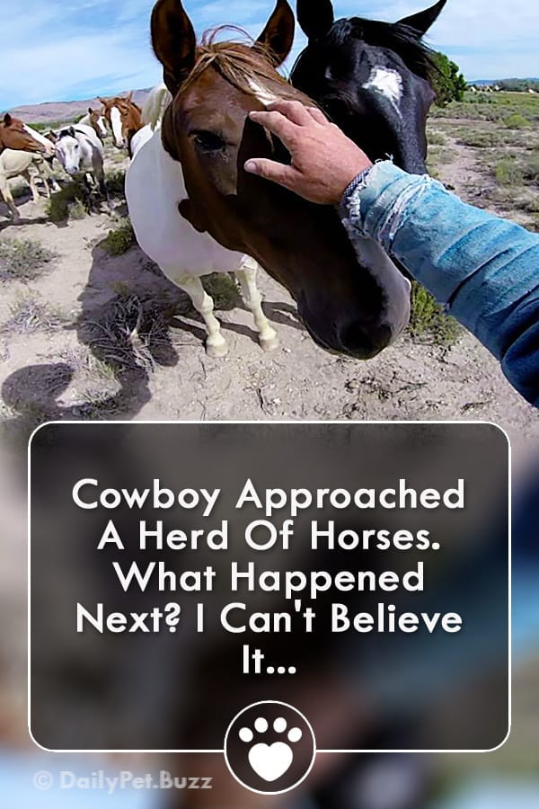 Cowboy Approached A Herd Of Horses. What Happened Next? I Can\'t Believe It...
