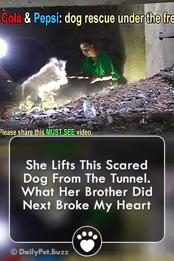 She Lifts This Scared Dog From The Tunnel. What Her Brother Did Next Broke My Heart