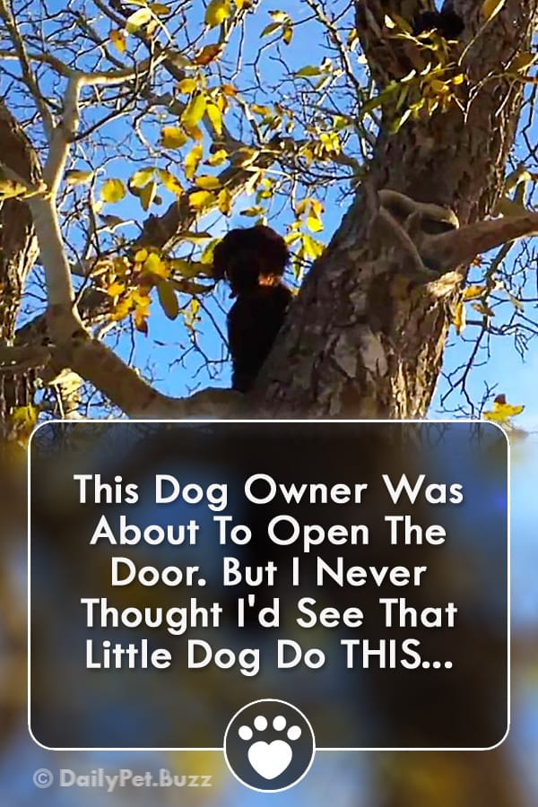 This Dog Owner Was About To Open The Door. But I Never Thought I\'d See That Little Dog Do THIS...