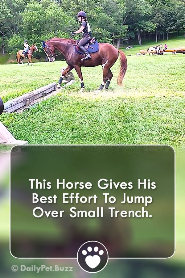 This Horse Gives His Best Effort To Jump Over Small Trench.