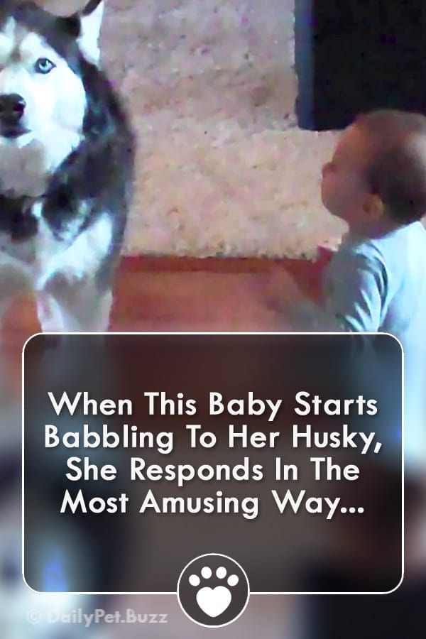 When This Baby Starts Babbling To Her Husky, She Responds In The Most Amusing Way...