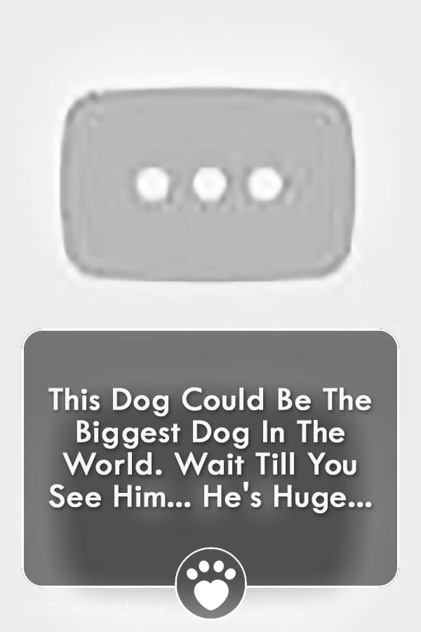 This Dog Could Be The Biggest Dog In The World. Wait Till You See Him... He\'s Huge...