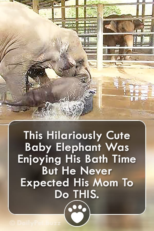 This Hilariously Cute Baby Elephant Was Enjoying His Bath Time But He Never Expected His Mom To Do THIS.