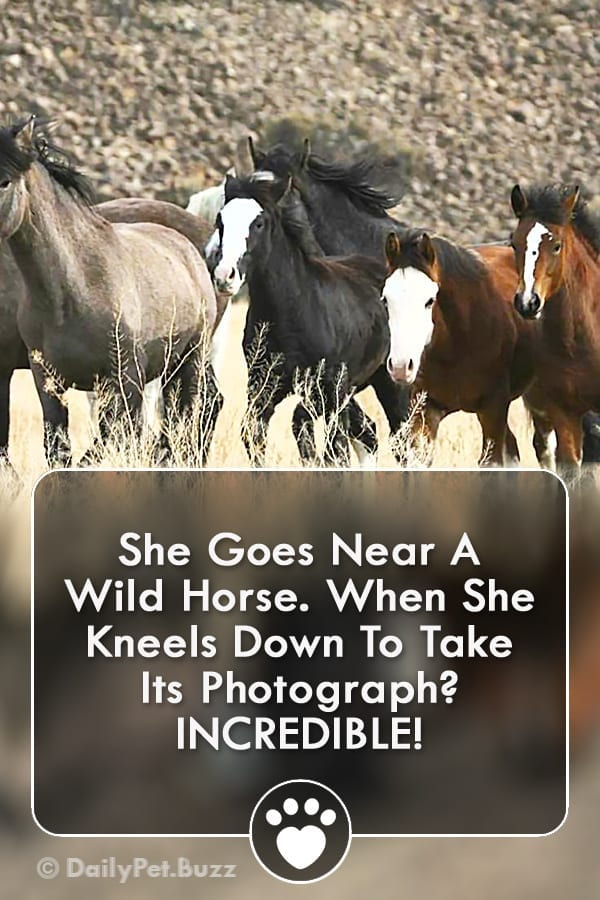 She Goes Near A Wild Horse. When She Kneels Down To Take Its Photograph? INCREDIBLE!