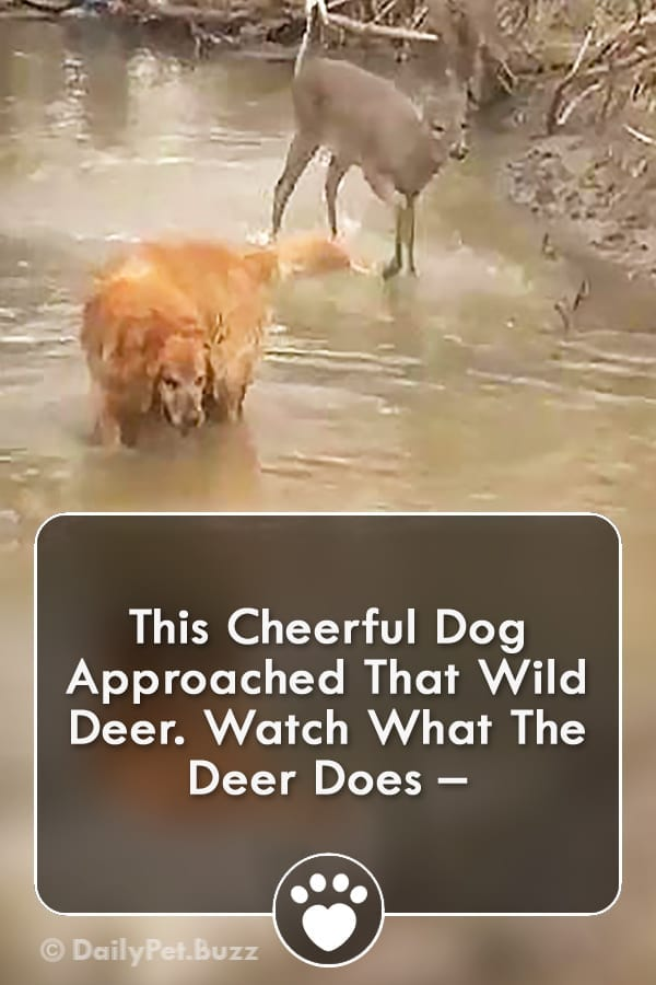 This Cheerful Dog Approached That Wild Deer. Watch What The Deer Does –