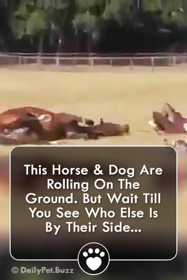 This Horse & Dog Are Rolling On The Ground. But Wait Till You See Who Else Is By Their Side...