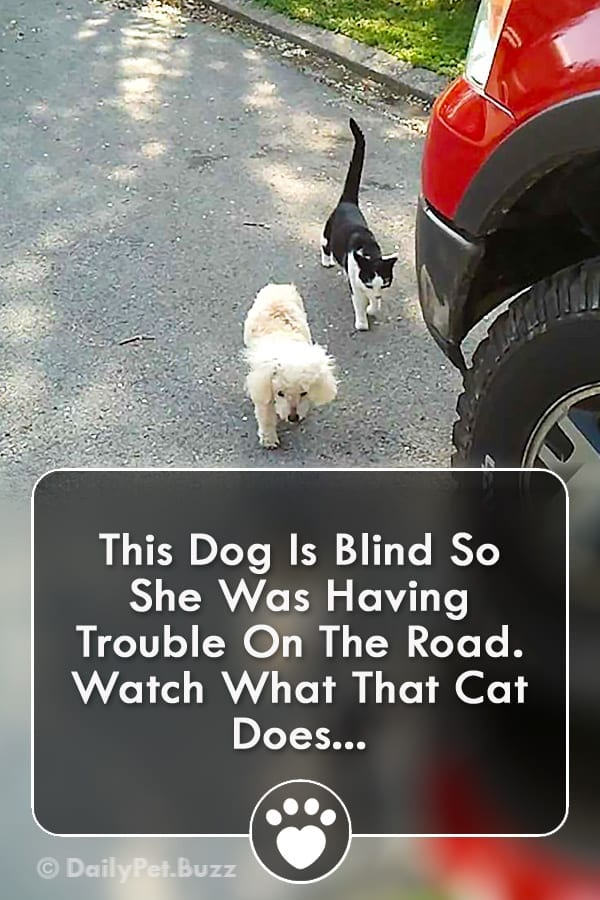 This Dog Is Blind So She Was Having Trouble On The Road. Watch What That Cat Does...