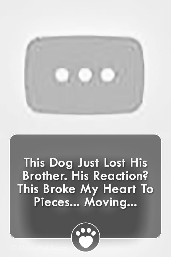 This Dog Just Lost His Brother. His Reaction? This Broke My Heart To Pieces... Moving...