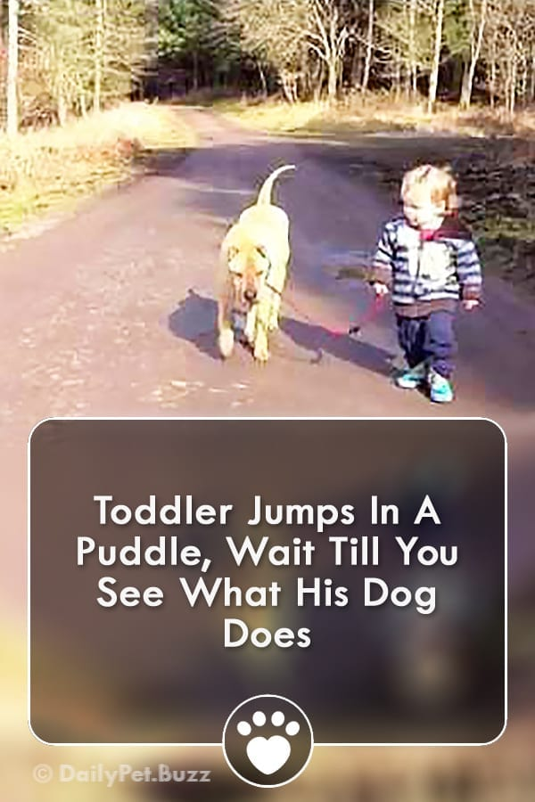 Toddler Jumps In A Puddle, Wait Till You See What His Dog Does