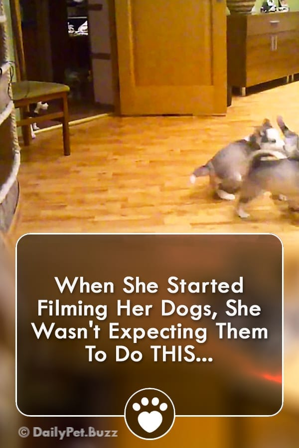 When She Started Filming Her Dogs, She Wasn\'t Expecting Them To Do THIS...