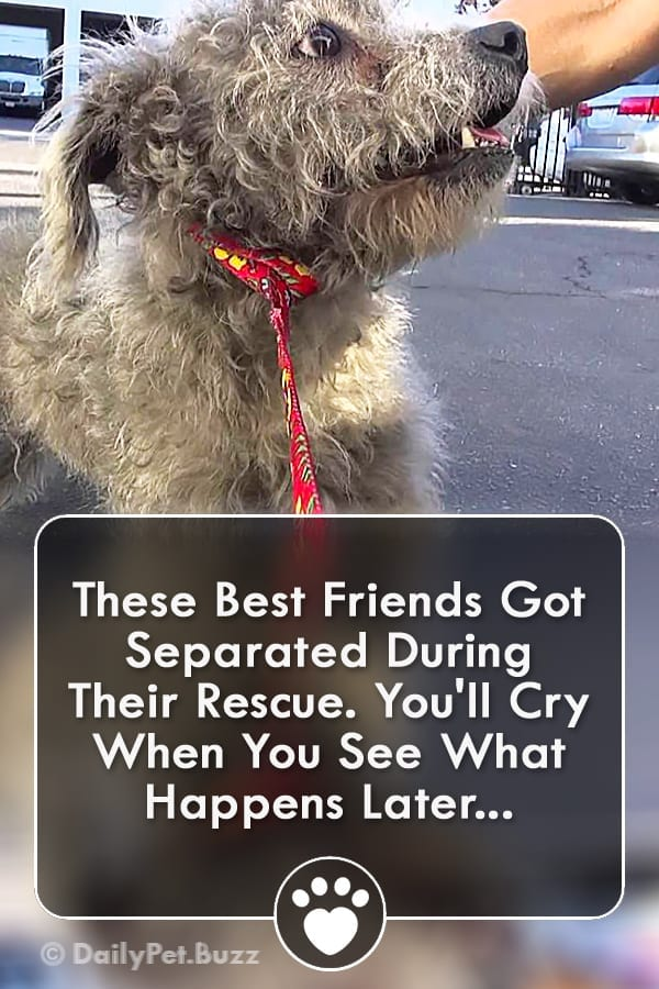 These Best Friends Got Separated During Their Rescue. You\'ll Cry When You See What Happens Later...