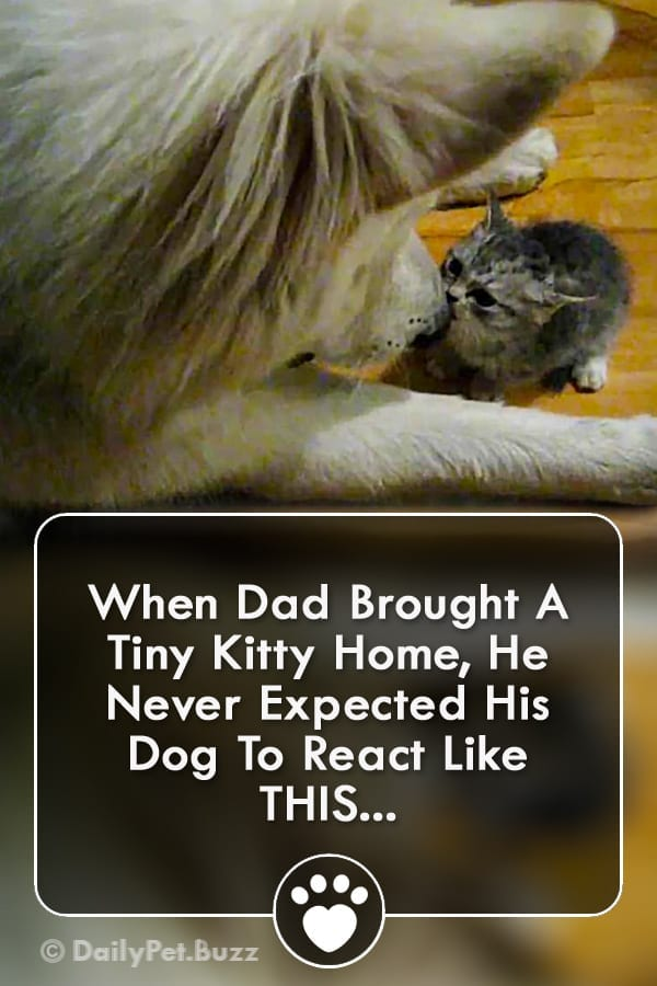 When Dad Brought A Tiny Kitty Home, He Never Expected His Dog To React Like THIS...