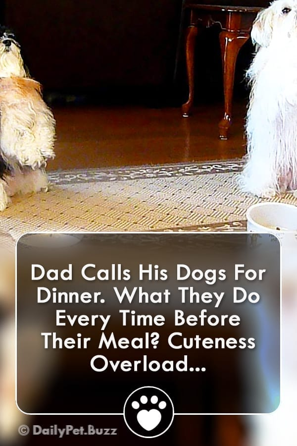 Dad Calls His Dogs For Dinner. What They Do Every Time Before Their Meal? Cuteness Overload...