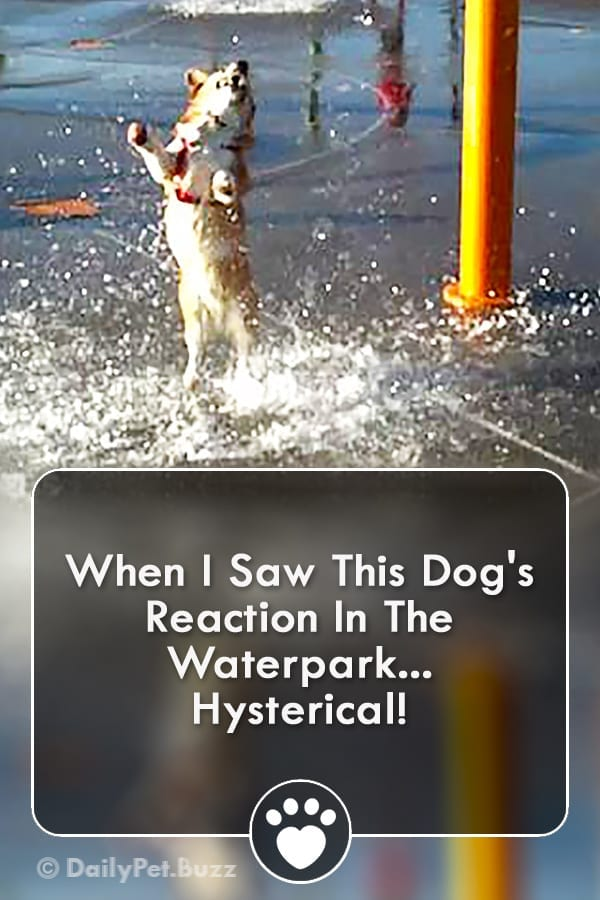 When I Saw This Dog\'s Reaction In The Waterpark... Hysterical!
