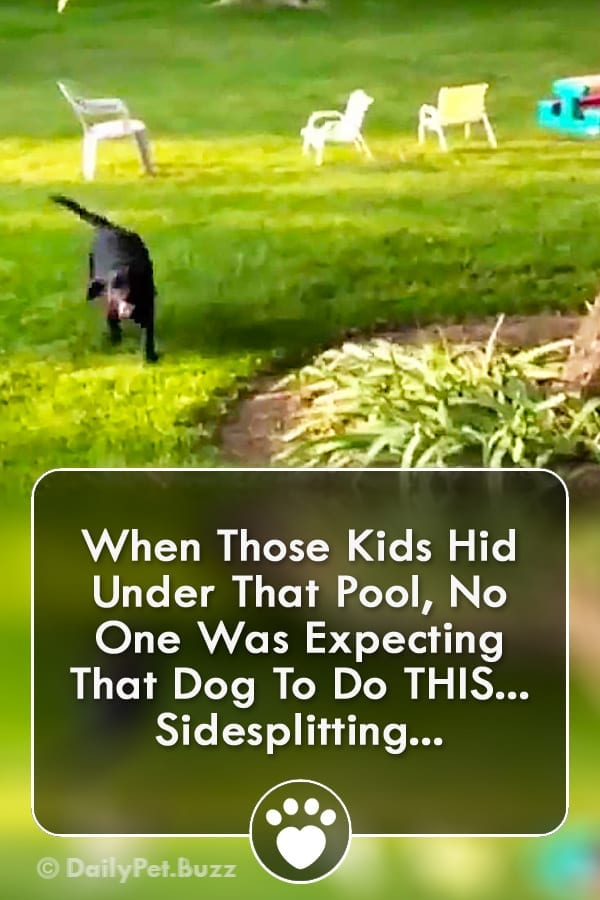 When Those Kids Hid Under That Pool, No One Was Expecting That Dog To Do THIS... Sidesplitting...