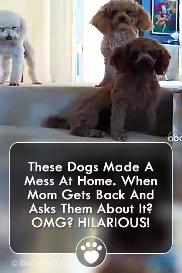 These Dogs Made A Mess At Home. When Mom Gets Back And Asks Them About It? OMG? HILARIOUS!