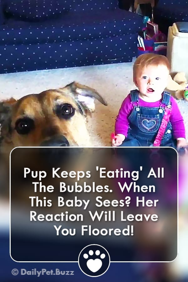 Pup Keeps \'Eating\' All The Bubbles. When This Baby Sees? Her Reaction Will Leave You Floored!