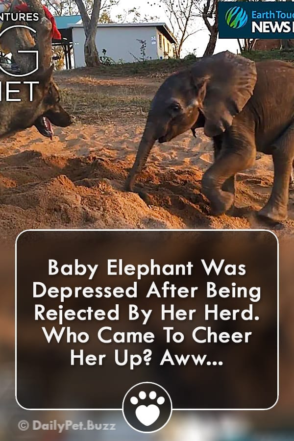Baby Elephant Was Depressed After Being Rejected By Her Herd. Who Came To Cheer Her Up? Aww...