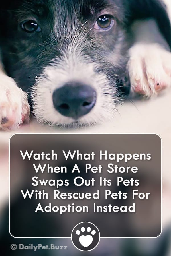 Watch What Happens When A Pet Store Swaps Out Its Pets With Rescued Pets For Adoption Instead