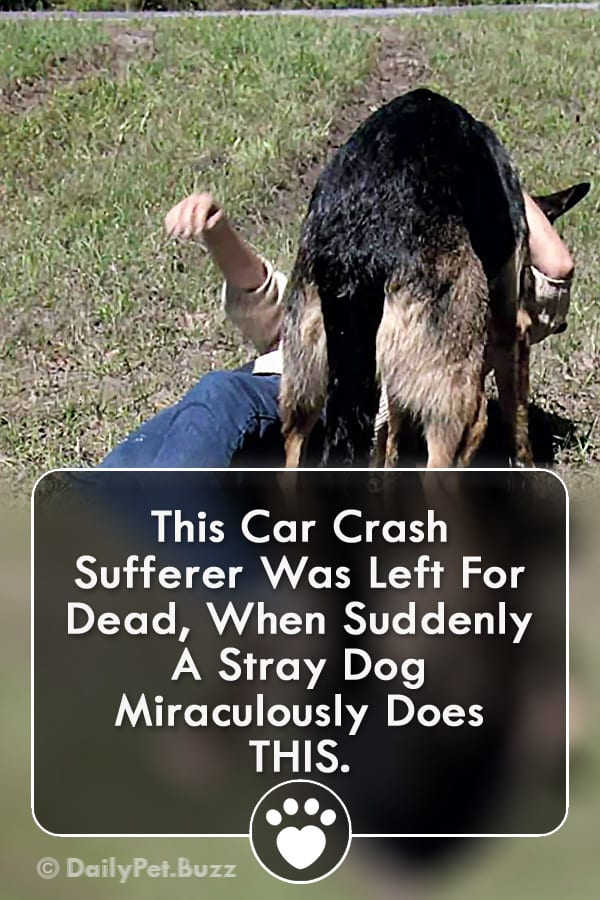 This Car Crash Sufferer Was Left For Dead, When Suddenly A Stray Dog Miraculously Does THIS.