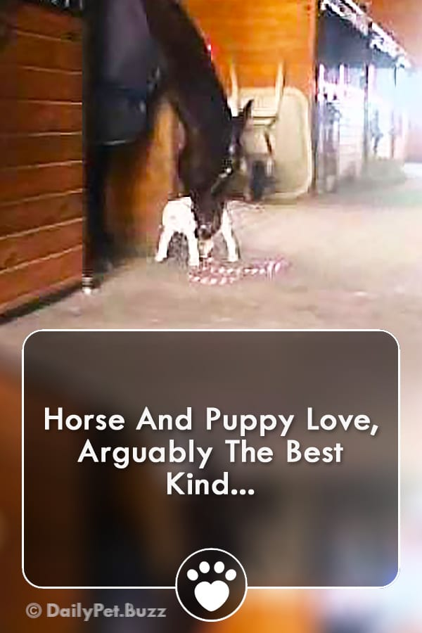 Horse And Puppy Love, Arguably The Best Kind...