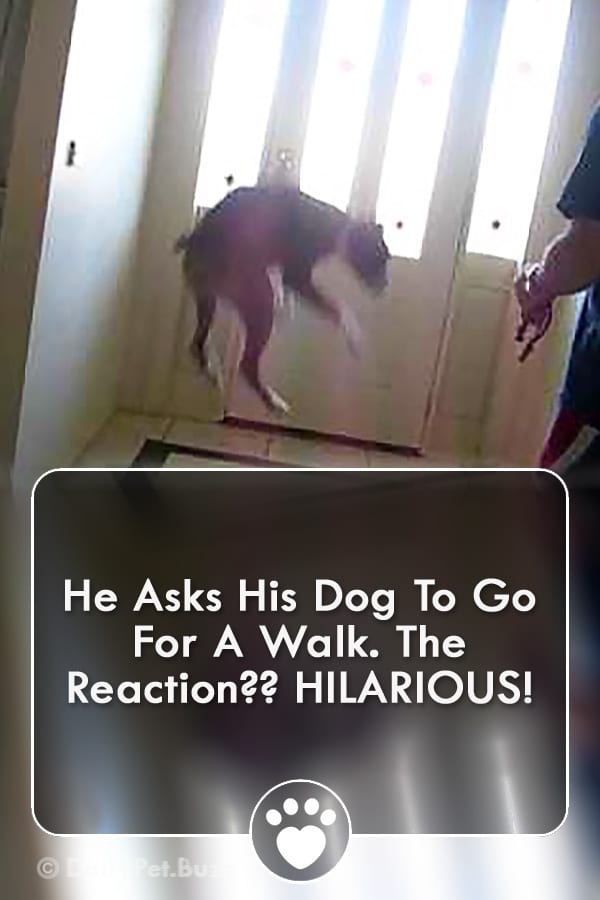 He Asks His Dog To Go For A Walk. The Reaction?? HILARIOUS!