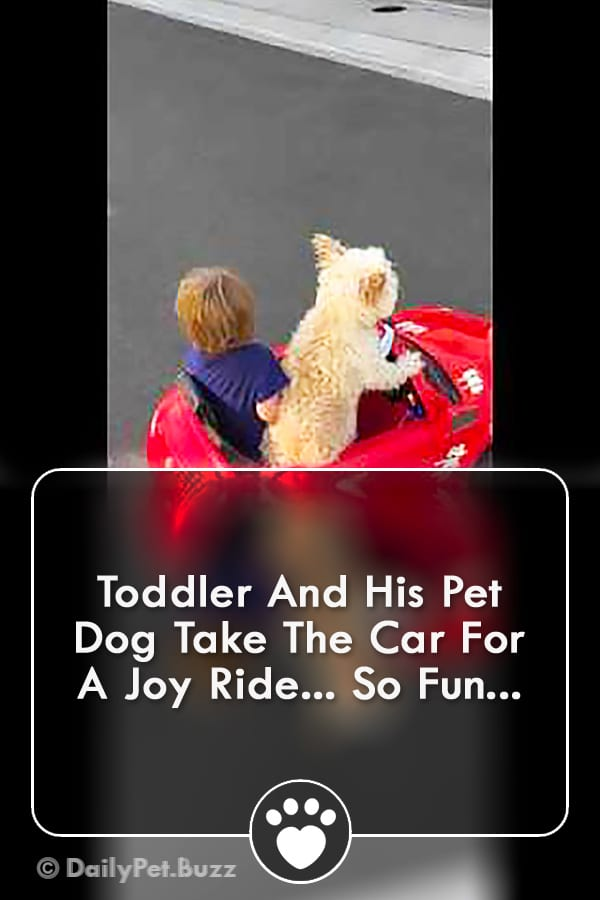 Toddler And His Pet Dog Take The Car For A Joy Ride... So Fun...